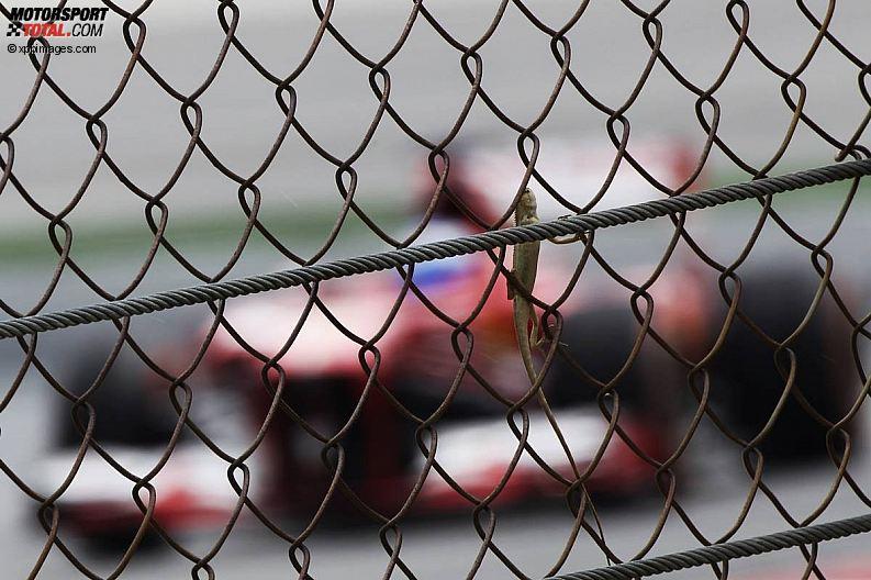 Formula 1- Season 2013 - z1363944028