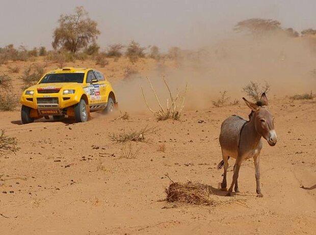 Esel bei der Rallye Dakar
