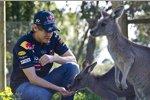Red Bull/Getty