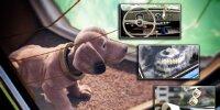 Kurioses Autozubehör: Vom Wackeldackel bis zum Fuchsschwanz