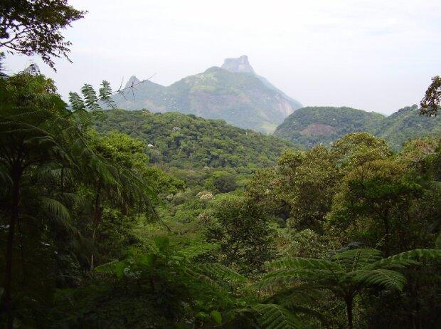 Regenwald in Rio de Janeiro