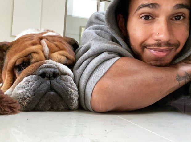 Lewis Hamilton mit seiner Bulldogge Roscoe