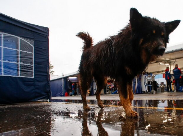 Hund im Fahrerlager