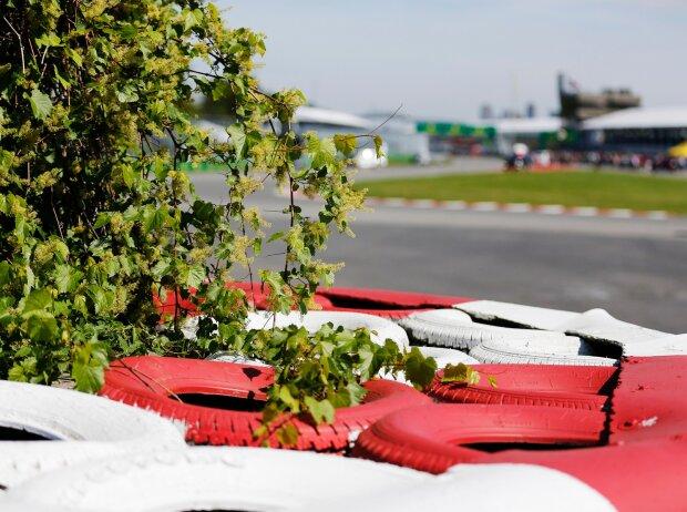 """Nur ein Aprilscherz: Das FIA-Projekt """"Score4Trees"""" (Symbolbild)"""