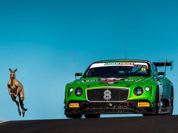 Känguru und Bentley Continental GT3 auf der Rennstrecke von Bathurst