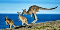 WRC: Rallye Australien