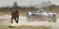 Das Duell: Gepard vs. Formel E