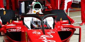 """Halo-Debatte spaltet Fahrer: """"Trauriger Tag für die Formel 1"""""""